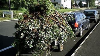 tilhenger med hageavfall